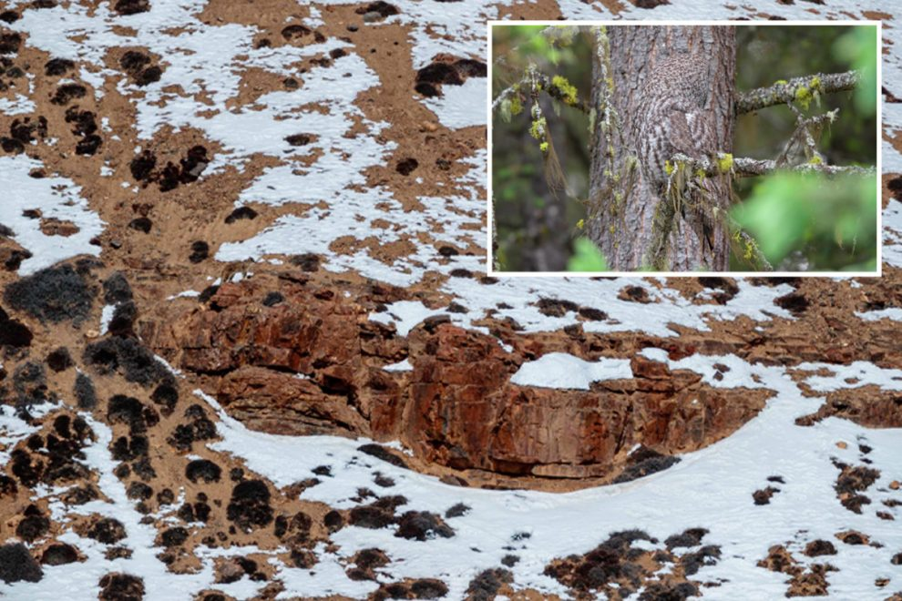 Can you spot the animals hidden in these incredible nature photos?