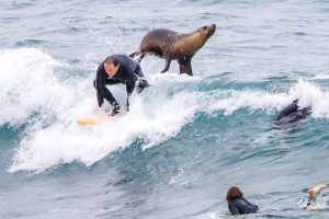 Incredible moment sea lion HELPS surfer catch a wave by giving him a helpful shove