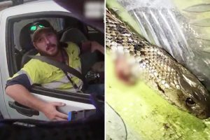 Australian man stopped speeding at 76mph reveals he was trying to fight off deadly snake in his lap with a knife