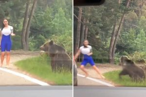 Woman trying to pose for photo with wild BEAR flees in terror as it angrily lunges at her