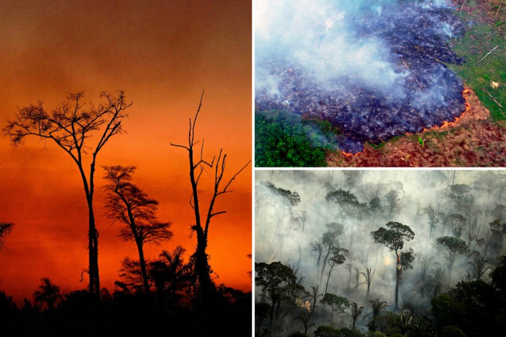 Amazon rainforest could 'collapse' as 2020 fires are set to be most devastating yet