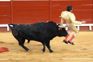 Eye-watering moment matador is gored in the BUM during one of Spain's first bullfights since coronavirus lockdown