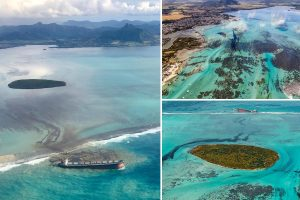 Mauritius declares emergency as oil tanker leaks 1,000 tonnes of fuel into Indian Ocean after running aground off island