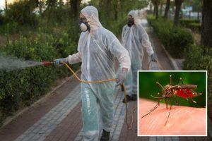 Terrifying outbreak of deadly West Nile fever grows in coronavirus-hit Spain as death toll hits 6